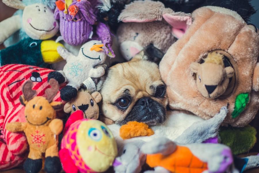 Personas-prefieren-perros-que-bebés-entenderá-3.jpg