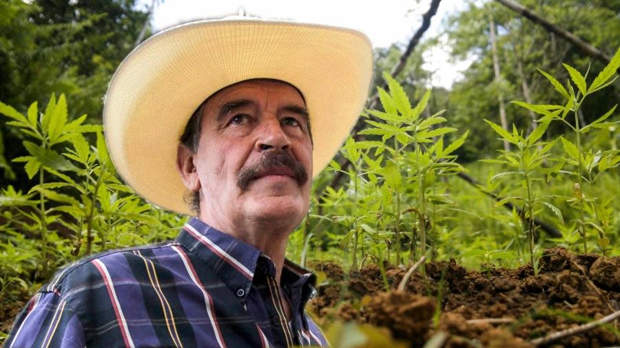 Vicente-Fox-Marihuana.jpg
