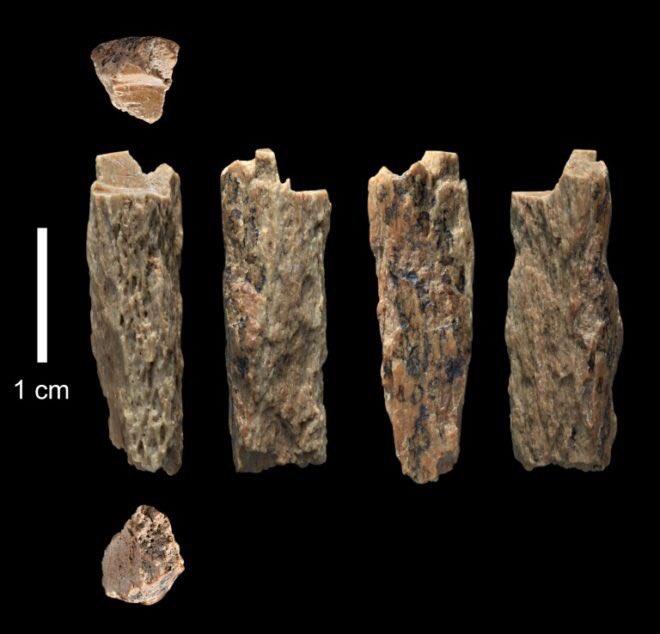 huesos primer híbrido humano denisovano neandertal