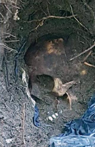 cadaver fosa clandestina veracruz 166 hallados