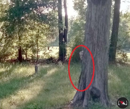 google maps cementerio niña fantasma