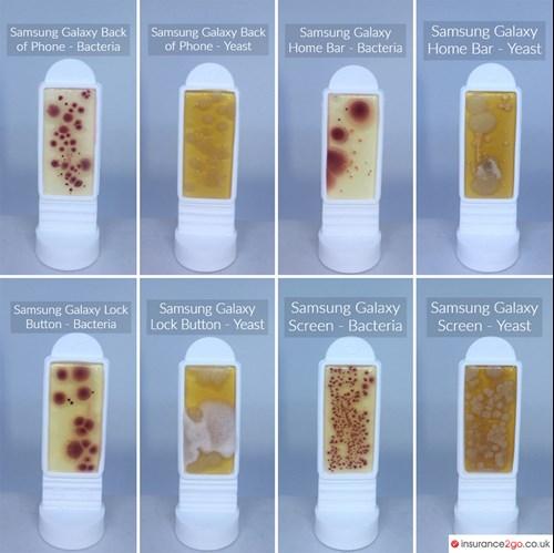 bacterias samsung galaxy
